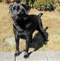 best ebony pics photos best fcaebaa ebony help find forever home