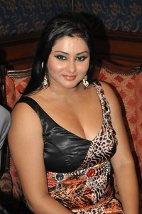hot boob galleries namitha fat beauty hot boobs saree pics box