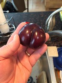 nice ass pictures ains comments faqbo this plum nice ass
