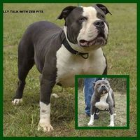 pictures of she males hphotos xap instagram males americanbully