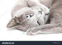 vagina pictures closeup stock photo close gray pussy cat laying pic