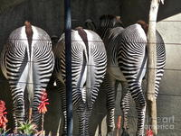 best butts pics medium large best butts san diego zoo carol bradley featured